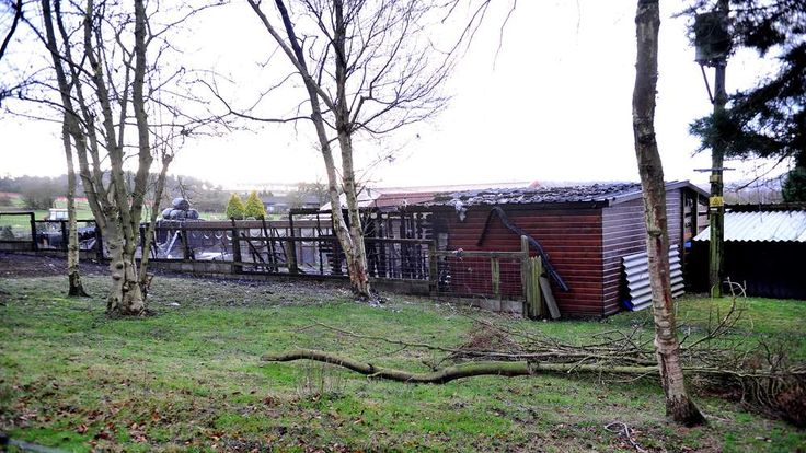 Pictured is the Pinetrees Cattery in Huntington. Photo: Birmingham Mail