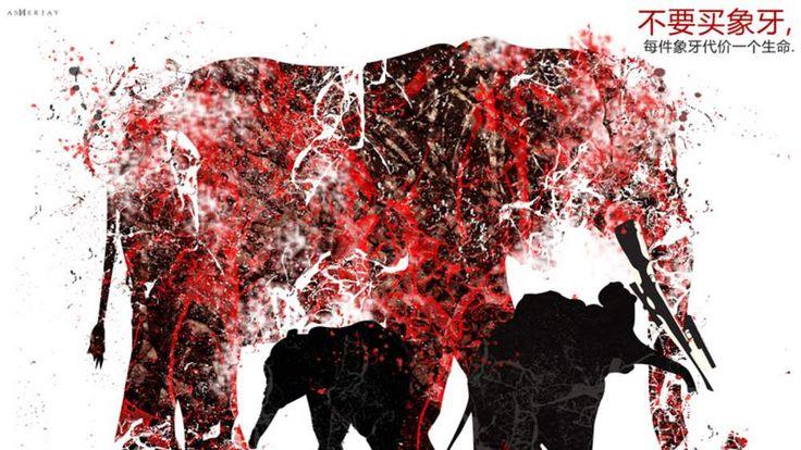 ElephantVoices campaign