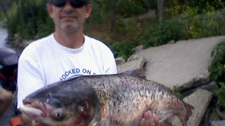 Asian carp are causing problems in Lake Michigan.
