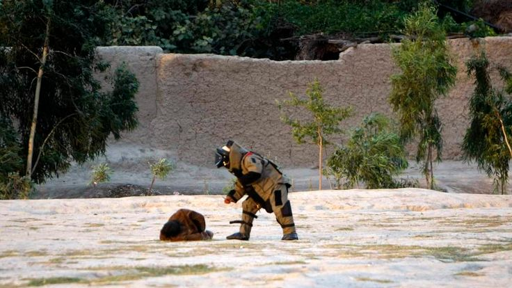 A member of the Afghan bomb disposal unit approaches a suicide attacker after his vest was defused in Jalalabad province