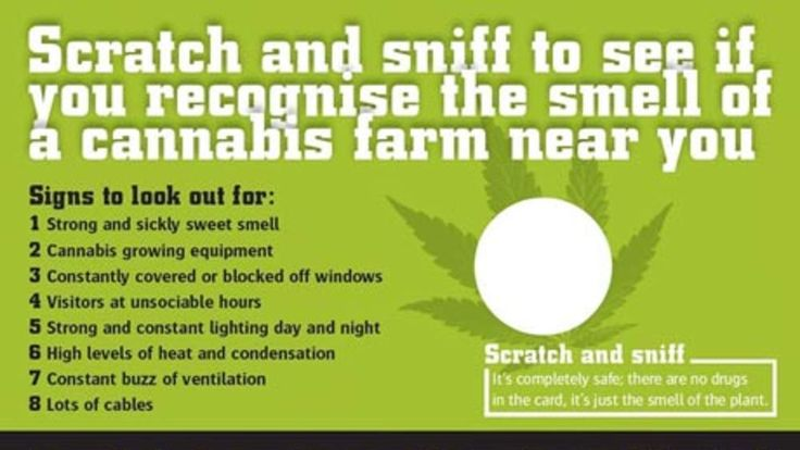 Scratch and sniff cannabis cards