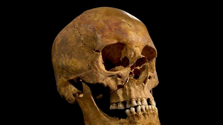 Skull could be King Richard III