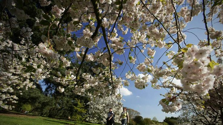 Spring weather in Kew Gardens, South London