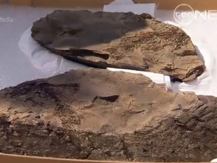 50 million year old fossil find Brisbane