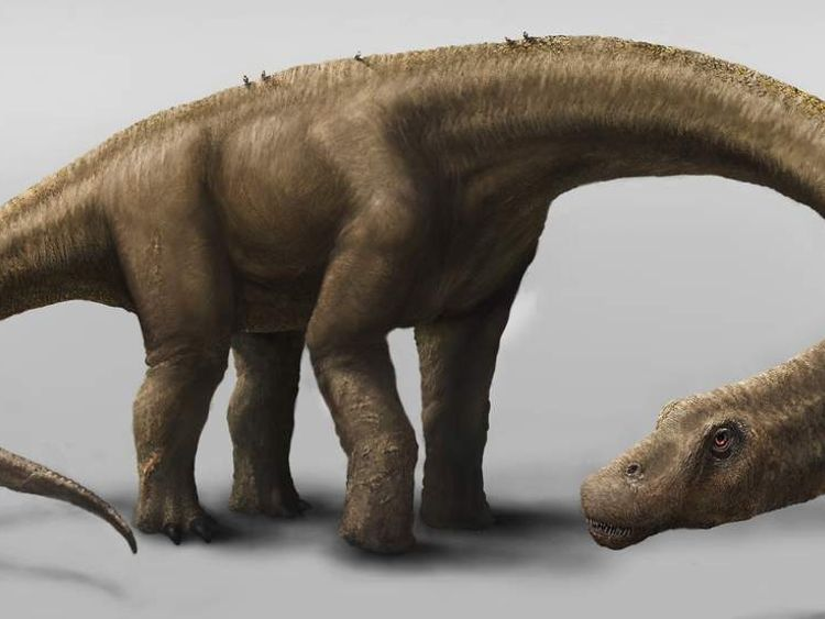 Giant Dinosaur Dreadnoughtus Schrani