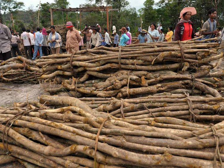 Illegal logging in Cambodia