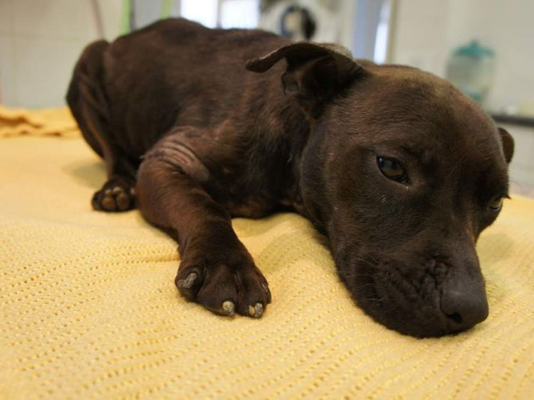 RSPCA Says More Animals Abandoned In 2012