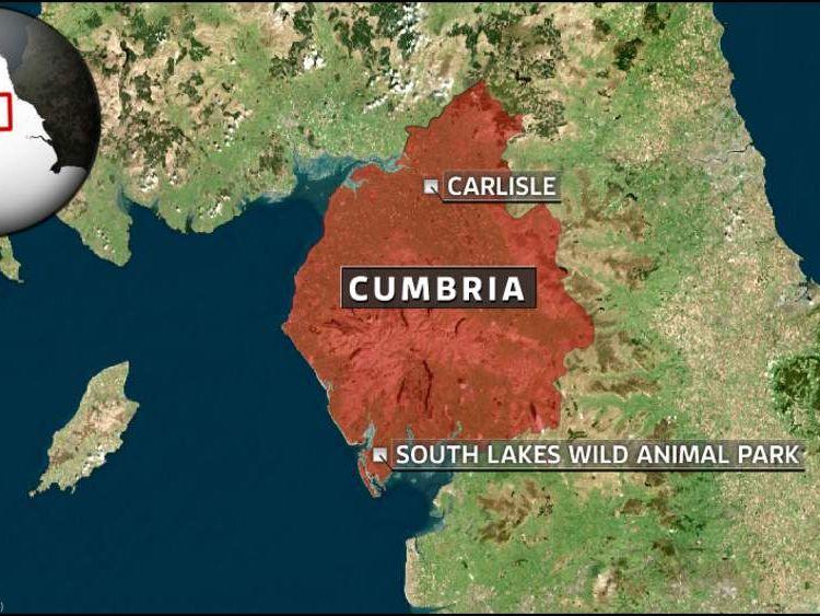 Cumbria tiger attack map