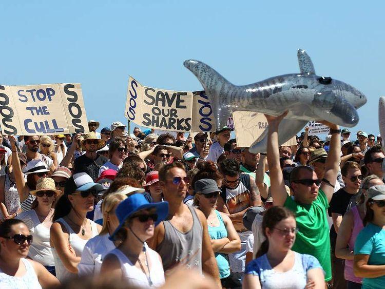Shark cull protest