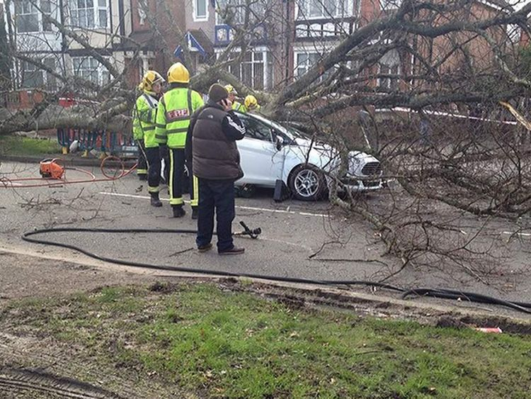 Woman injured as tree falls on car