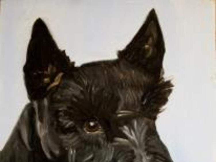 Barney the Scottish terrier