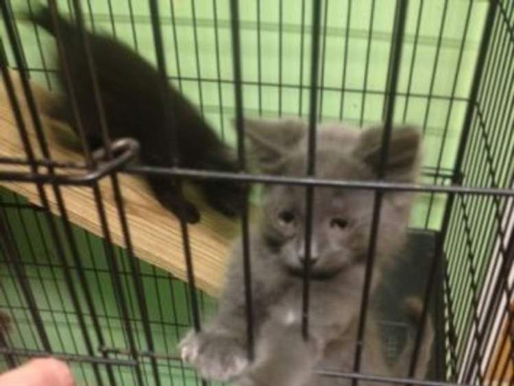 Rescued cats. Pic Schoharie County Sheriff's Office
