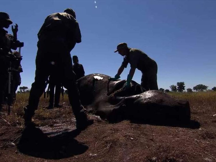 Rhino killed by poacher in Kruger National Park