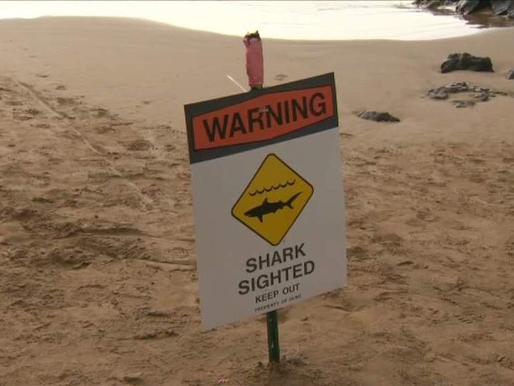 Maui shark attack beach closed sign