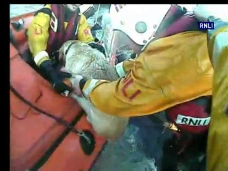 RNLI dog rescue
