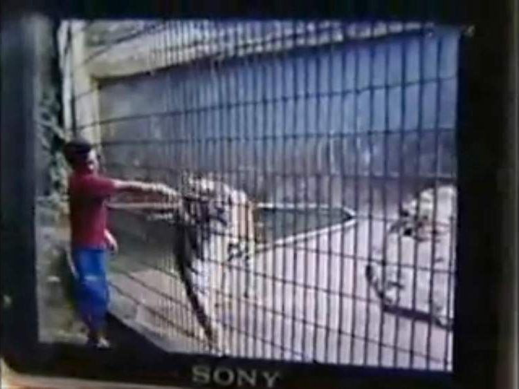 Boy's arm torn off by tiger in Brazilian zoo