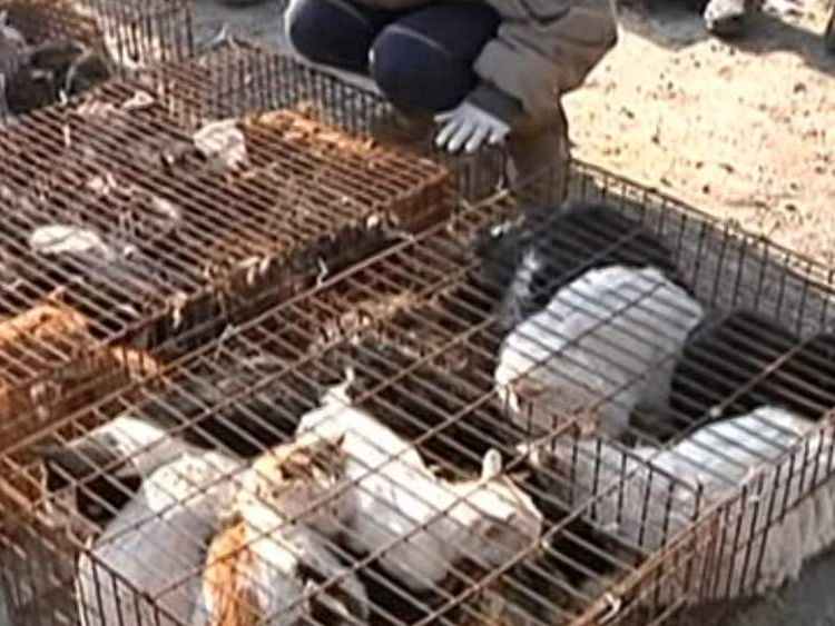China rescued cats