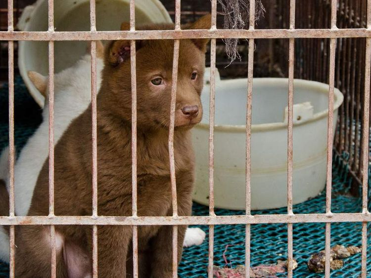 A dog looks out of a cage in Seishan. Pic: Animal Equality