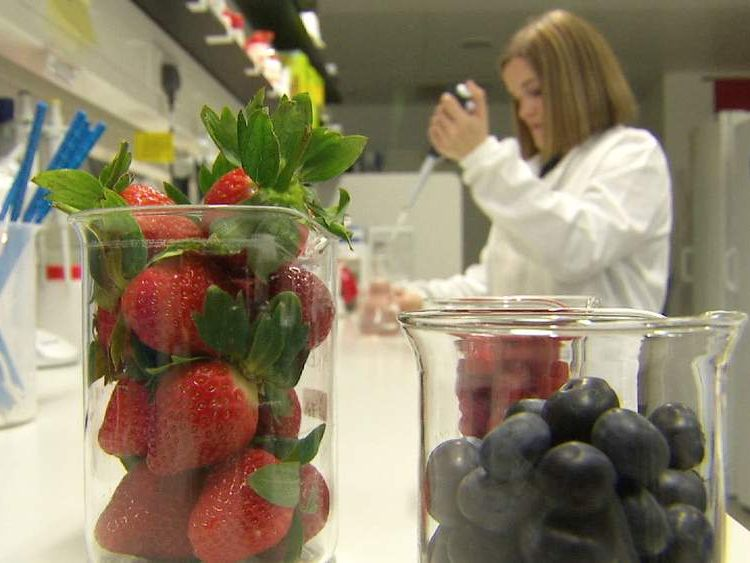 Scientists test food and drink that may help cut diabetes