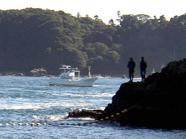 Two dolphins herded by fishing boats in Taiji in 2003