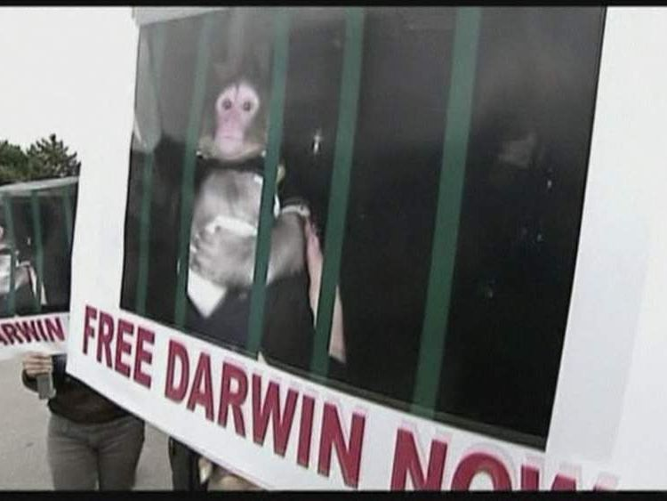 Darwin The Ikea Monkey Protests