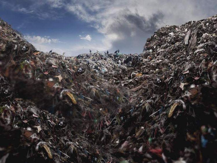 Food waste.