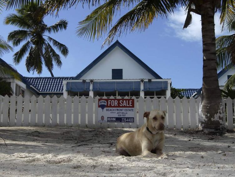 A dog sits outside of the home of anti-virus software pioneer John McAfee