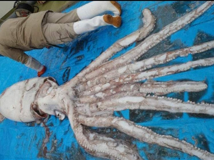 A man posing against the squid
