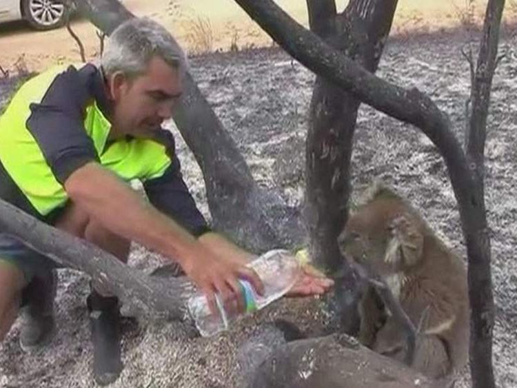 Koala given water amid bushfire