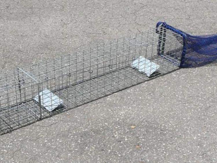New USDA patented python trap. Credit USDA Wildlife Services
