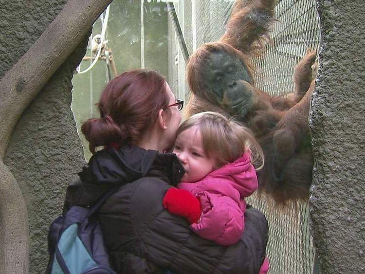 Chester Zoo's baby Sumatran orangutan