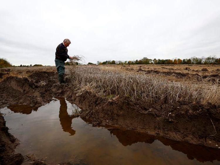A farmer inspects unharvested barley near Heather