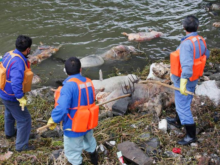 Cleaning workers retrieve the carcasses of pigs from a branch of Huangpu River in Shanghai