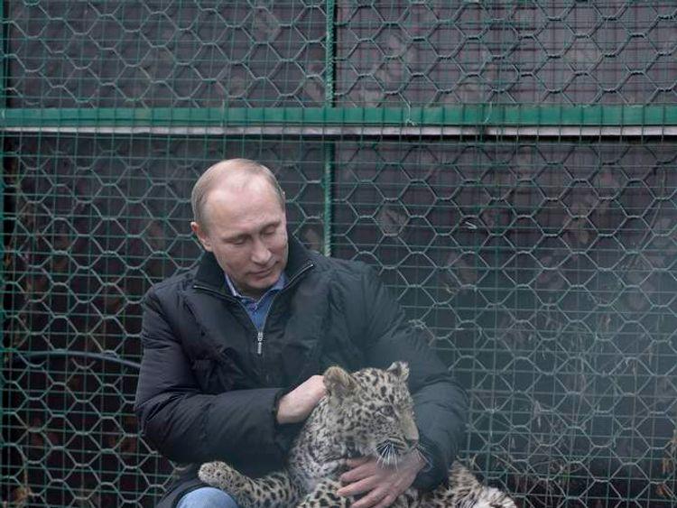 Russian President Putin strokes a Persian leopard