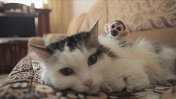 Rosinka never had kittens of her own