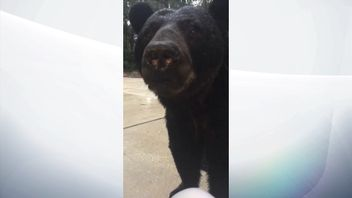 This bear appeared on Teliece Sander's patio