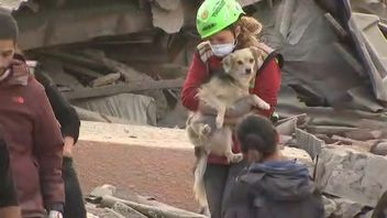 A dog is rescued from the earthquake rubble
