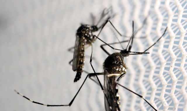 Two British Zika cases found in Florida