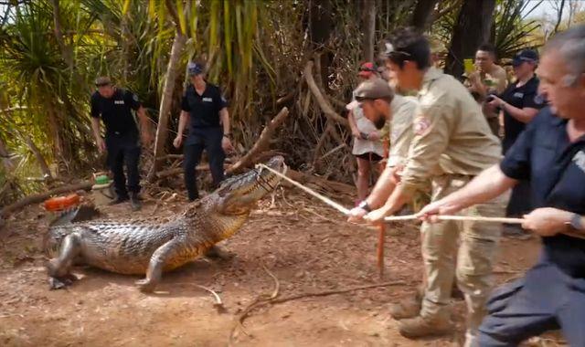 Australian police capture cattle-eating crocodile