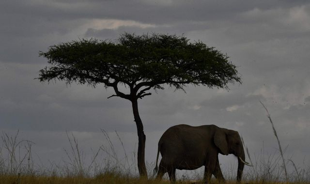 More than 100,00 elephants killed for ivory over decade, new figures reveal