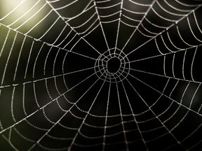 Spiders can tune the tension of their webs to act like a guitar string, say researchers