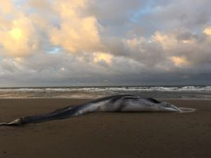 Whale washes ashore on Norfolk beach
