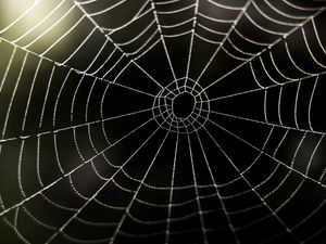 Spiders 'tune' webs to help catch prey and partners