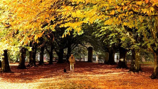 A man walks his dog through the fallen leaves at Clarkes gardens in Allerton, Liverpool, Merseyside