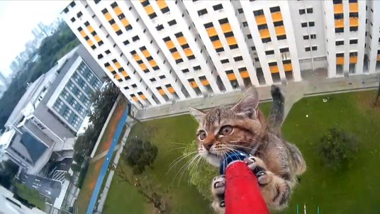 The cat was sitting on a ledge of the tower block