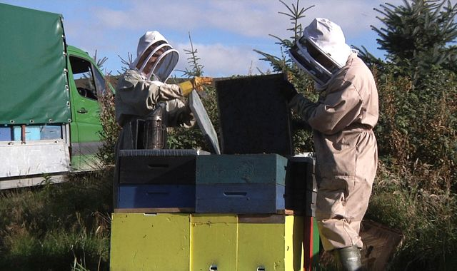 The new generation helping save British bees