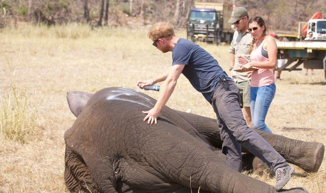 Prince Harry helps to save hundreds of elephants in Africa