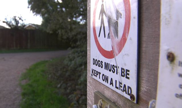 Hounded out: Councils 'are waging war on dogs'