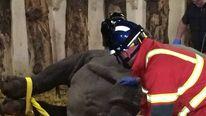 Pic: Scottish Fire and Rescue Service