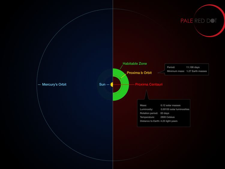 A graphic showing the orbit of the planet around Proxima Centauri